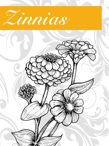 Zinnias+Graphic