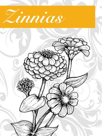 Zinnias+Graphic