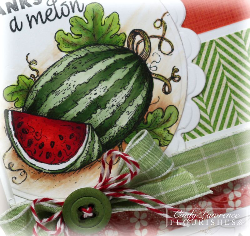 Wild for Watermelon 1 Close Up - OHS