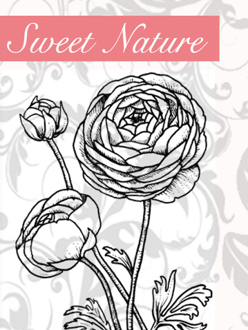 Sweet+Nature+Graphic