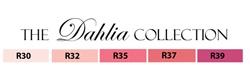Copic Dahlia