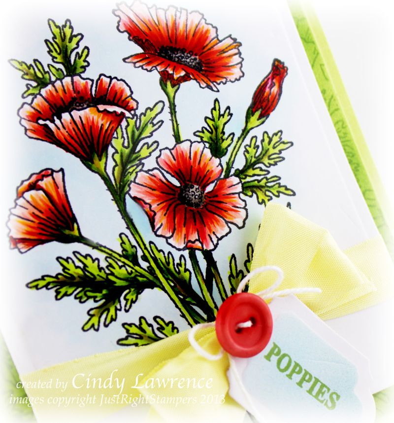 Poppies-Labels-Twenty-Nine-Close-Up-1---OHS