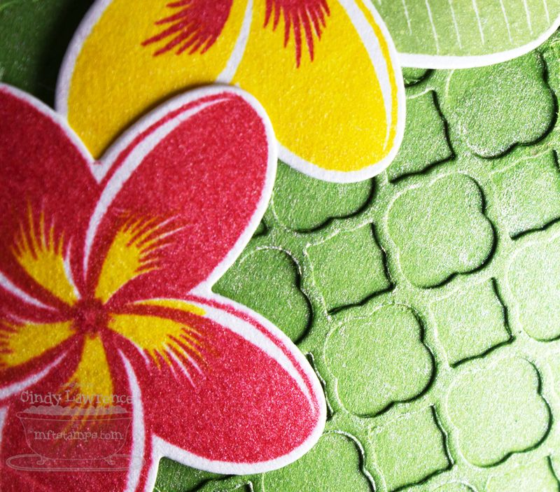 Tropical-Sensations-2-Close-Up---OHS