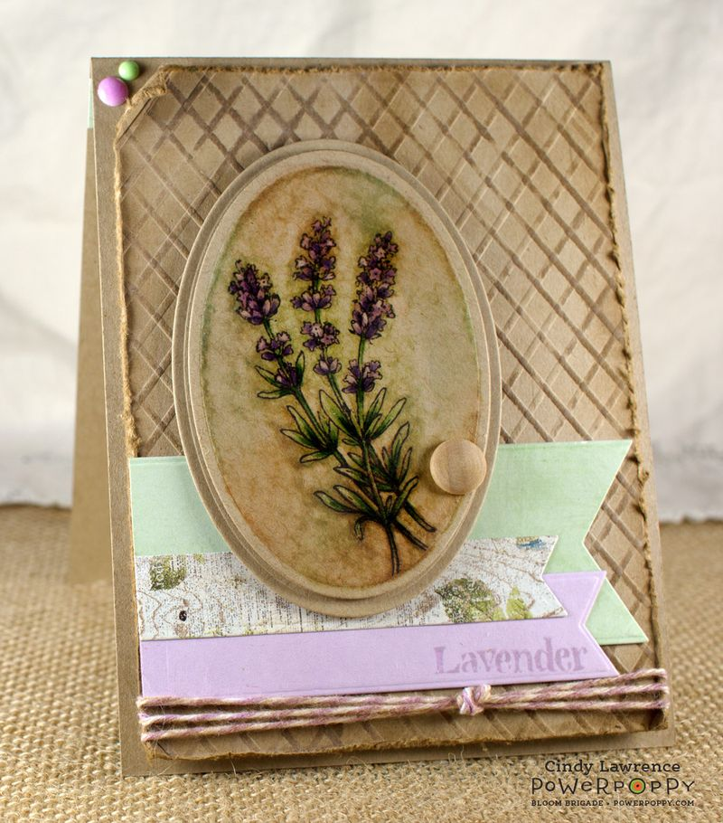 Lavender-2--OHS