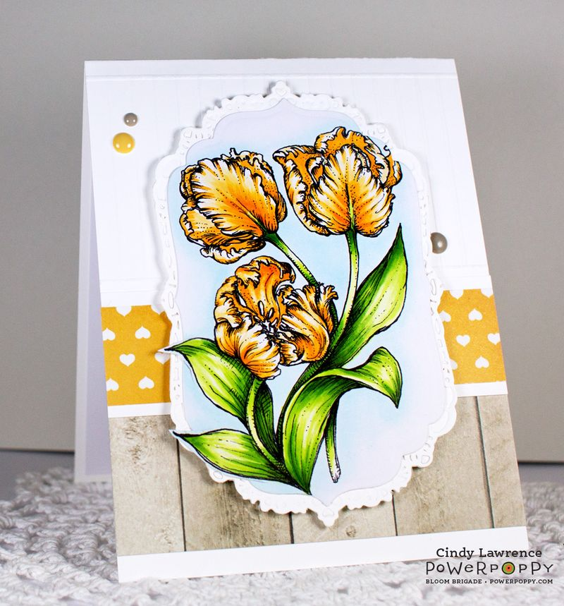 Tulips-1---OHS