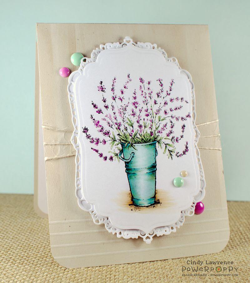 Lavender-1---OHS