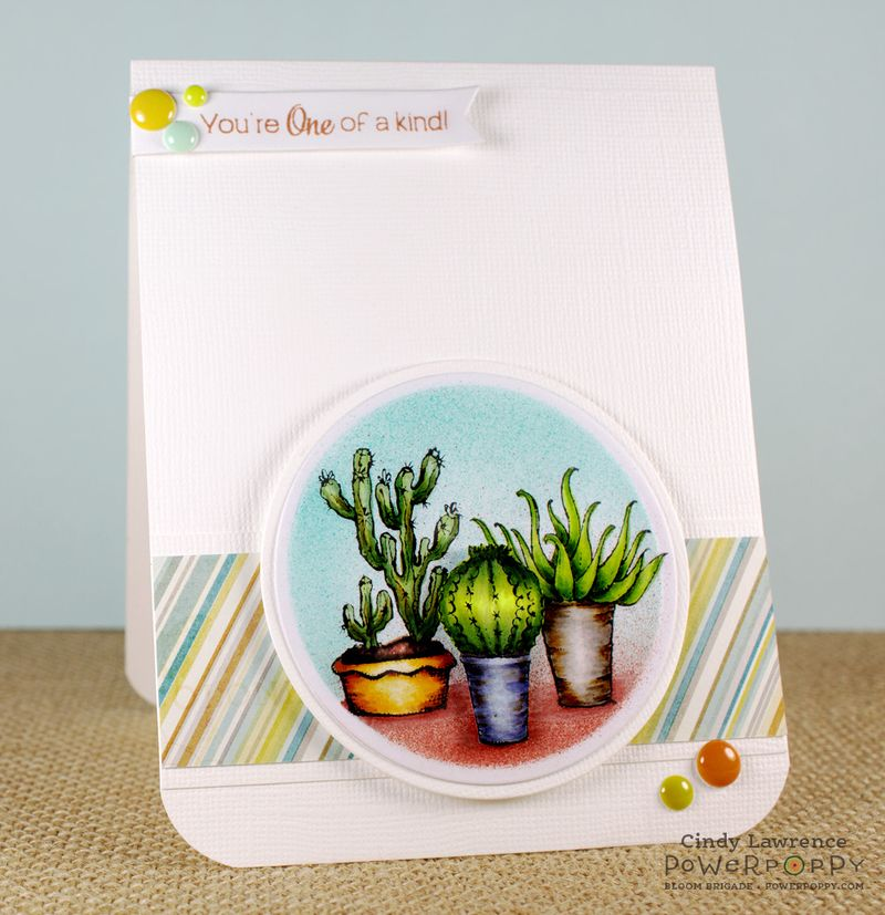 Sassy-Succulents-1---OHS