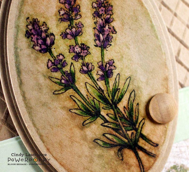 Lavender-2-Close-Up--OHS