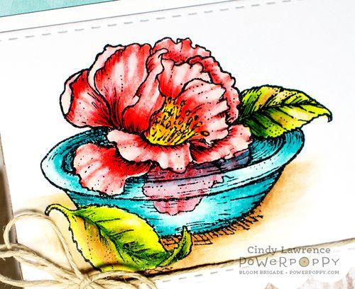 Simply-Camellias-1-Close-Up---OHS