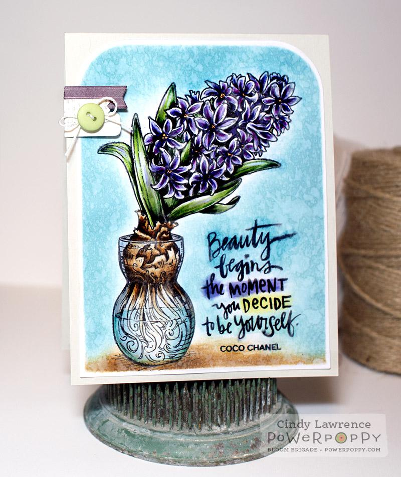 Hyacinth - OHS