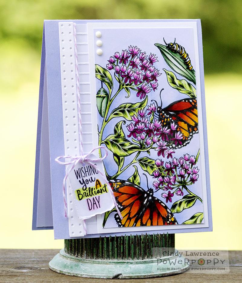 Monarchs and Milkweed 1 - OHS