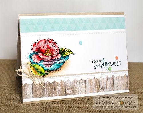 Simply-Camellias-1---OHS