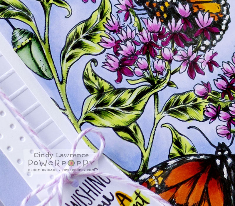 Monarchs and Milkweed 1 Close Up - OHS