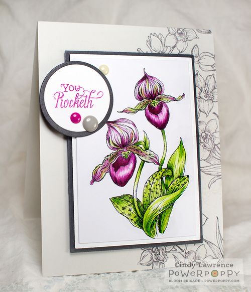 Orchids-Rock-1---OHS
