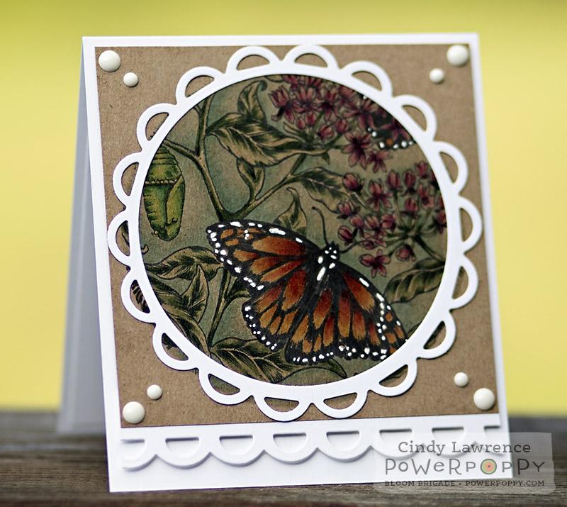 Monarchs & Milkweed 2 - OHS