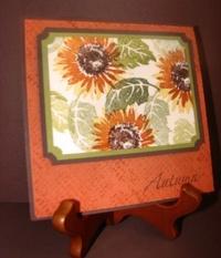 Sept_sunflower_demo_ohs_2